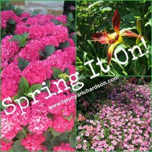 Spring it on